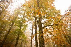 Δάσος οξυάς